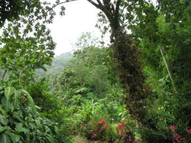 A forest in Dominica
